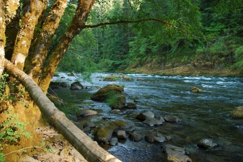 island campground umpqua river