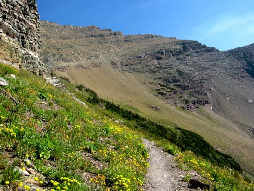 siyeh-pass_trail-flowers