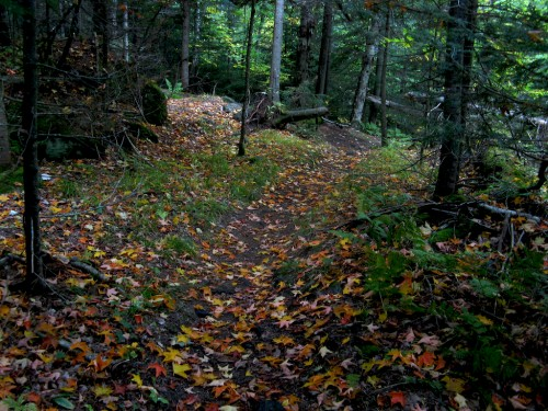 big-slide_leafy-trail