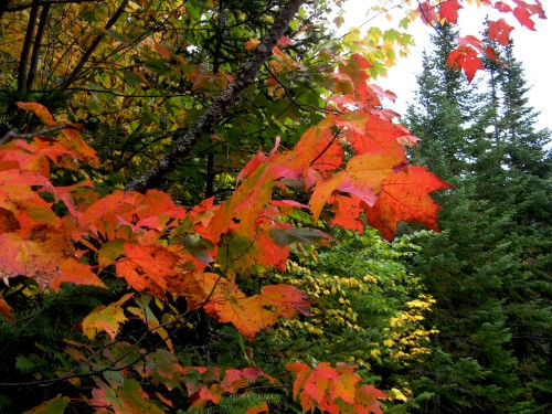 big-slide_red-leaves
