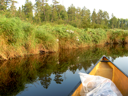 bwca_moose-river-bank