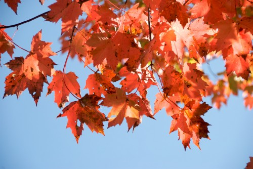 new-hampshire_red-leaves