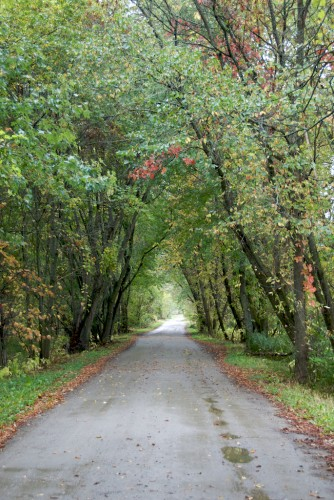 new-hampshire_tree-tunnel