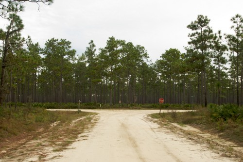 apalachicola_t-intersection