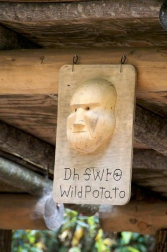 cherokee_wild-potato