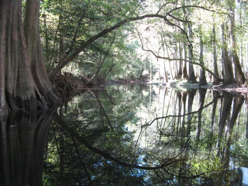 congaree_leaning-branch