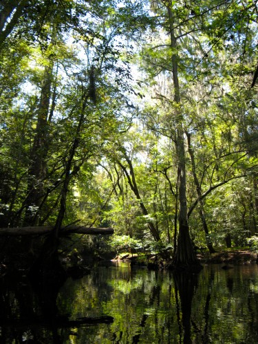 congaree_y-in-creek