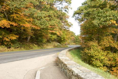 shenandoah_skyline-drive-leaves