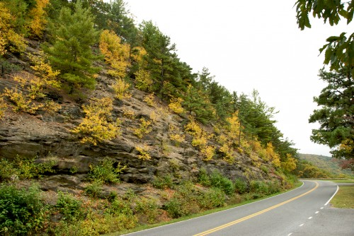shenandoah_yellow-by-road