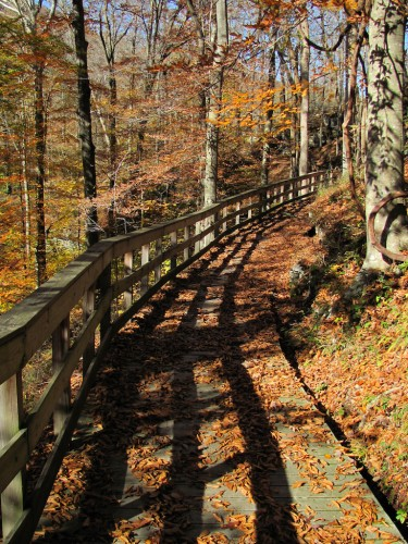 mammoth-cave_boardwalk