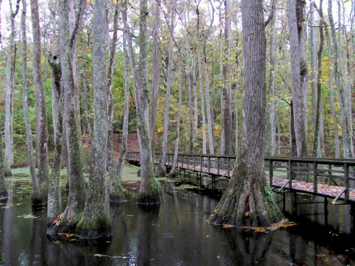 natchez-trace_swamp-bridge